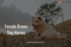 Are you looking for the cute brown dog names female and male for White and Brown Dog Names of your most faithful pet Different dogs have different breeds according to their region and origin country. That's why in this list below. . #dog #dogs #frenchbulldog #doglovers #doglife #dogsofinsta #doggy#lovedogs #doglove #instadogs #cutedog #dogsofinstaworld #dogslife #happydog #cutedogs #browndog #browndogs Brown Dog Names, Black Dog Names, Brown Puppies, Puppy Names, Different Dogs, Happy Dogs, Dog Life, Cute Dogs, French Bulldog