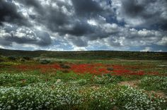 ♥ Anemones on HDR by *haimohayon
