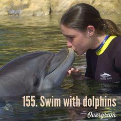 Swim with dolphins: bucket list.