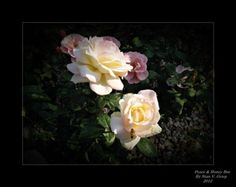 Tips On Photographing Roses & Flowers - I am truly an amateur photographer; however, I have held my own in various photography contests, shows and related events. In this article, I will be sharing tips for taking pictures of roses and flowers. Gardening Photography, Dslr Photography, Floral Photography, Photography Contests, Photography Ideas, Vegetable Boxes, Rose Pictures, Bath And Beyond Coupon, Wedding Bridesmaids