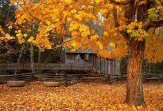 Cabana na paisagem outonal.  Fotografia: Pixdaus.com   https://www.buzzfeed.com/summeranne/45-cozy-cabins-youll-want-to-hide-away-in-forever?crlt.pid=camp.2Gr9PEJdcoMj&utm_term=.mcRLyeWoe#.epgOyLroL