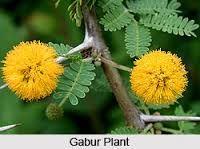 Image result for kamini flower