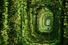 誠実に愛し合っているカップルがこのトンネルをくぐると願い事が叶うという伝説?から『愛のトンネル』と呼ばれているそうです。
