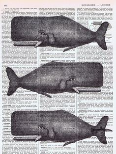 vintage whale print--yet another thing to do with those pages i have