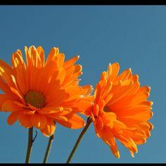 Blue and Orange...