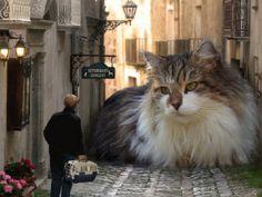 Ooops...giant cat!