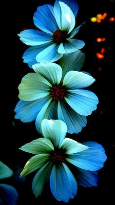 Beautiful glowing blue flowers