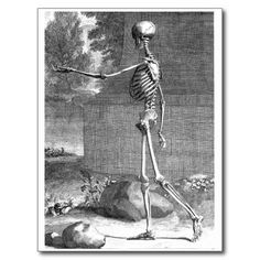 vintage skeleton anatomy - Google zoeken