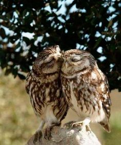 My favorite owl picture ever!