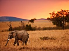 There are several parks in Africa, but one touch of park is located in Serengeti being been National Park stretched through Tanzanian country. Group Of Elephants, Elephants Photos, Tanzania Safari, Serengeti National Park, Beautiful Sites, African Animals, Nature Pictures, Savannah Chat, Places To Go