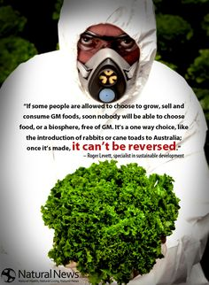 If some people are allowed to choose to grow, sell and consume GM foods�