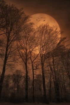 A big bright orange moon with bare tree silhouettes captures just what we think of in a harvest moon, stunning and slightly spooky. Beautiful Moon, Beautiful World, Moon Beauty, Stars Night, Shoot The Moon, Harvest Moon, Autumn Harvest, Harvest Time, Autumn Leaves