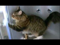 Cat cleaning bathroom