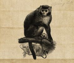 Digital Graphic Antique Animal Monkey by DIYVintageArt on Etsy