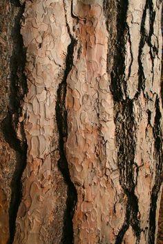 Tree Bark Texture Close-up,
