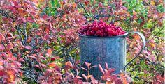 biokia - Google Search Moscow Mule Mugs, Berries, Health, Tableware, Plants, Google Search, Dinnerware, Health Care, Tablewares