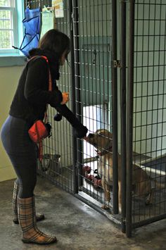 You may have noticed that we spend a significant amount of our time and resources investing in teaching shelters about kennel enrichment and play groups. If you're wondering how promoting kennel en...