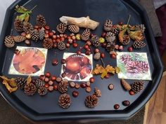 Autumn sorting activity Autumn Eyfs Activities, Nursery Activities, Activities For 2 Year Olds, Sorting Activities, Work Activities, Autumn Crafts, Autumn Art, Autumn Ideas, Reggio