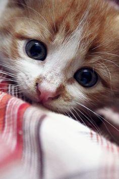 Sweet eyes by RikaAi.deviantart.com on @deviantART