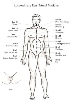Natural Ren Meridian - ECAN International school of acupuncture - Learn Acupuncture in India. Next Course November 2016 Acupuncture Points Chart, Meridian Acupuncture, Acupressure Points, Alternative Therapies, Alternative Medicine, Ayurveda, Tai Chi, Shiatsu, Accupuncture