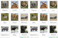 Montessori African Animals 3-Part Cards