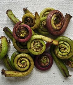 let's find fiddlehead ferns in our woods and cook them with brown butter and lemon