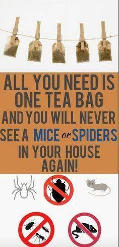 One Tea Bag And You Will Never See A Mice Or Spiders In Your House Again! (Works great) - PowerfulRemedy Mice and spider infestations are problems that are bothering thousands of households around the globe. A huge number of homeowners All You Need Is, Just In Case, House Cleaning Tips, Cleaning Hacks, Get Rid Of Spiders, Getting Rid Of Mice, Used Tea Bags, Peppermint Tea, Ideias Diy