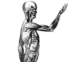 Anatomía anatomía del cuerpo carta médica 11