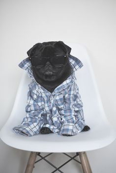 How to Make Your Dog InstaFamous http://www.thepugdiary.com/how-to-make-your-dog-instafamous/