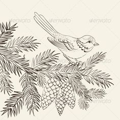 Bird on Christmas Fir and Pinecone - Christmas Seasons/Holidays