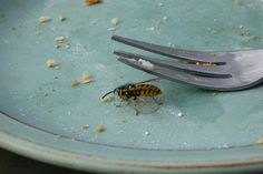 Keep wasps out – effectively and gently with these tricks - Home Cleaning Hacks