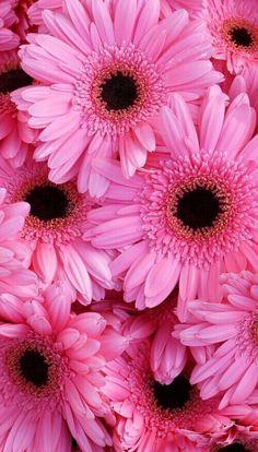 鮮やかな華やかに咲き誇る