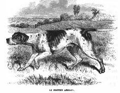 Le Pointer est un chien de chasse dont l'origine est bien mystérieuse. Si son utilisation à la chasse est largement référencée par de nombreux écrivains, sa création même reste un débat où théories, hypothèses et croyances se mêlent