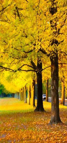 Yellow Autumn, Uhlerstown, Tinicum, Pennsylvania, USA by Preeti Desai