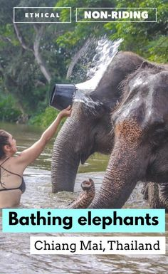 We visit the best Chiang Mai elephant sanctuary (NON-RIDING!) for volunteering with Thailand elephants, including feeding, walking, and bathing them! Thailand Travel Guide, Asia Travel, Travel Pics, Travel Articles, Travel Abroad, Wanderlust Travel, Chiang Mai, Thailand Elephants, Koh Tao