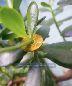Tenha boas vibrações com a planta Jade, a árvore da fortuna