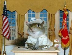 sugarbush squirrel   Sugar Bush Squirrel - International Superstar - Supermodel & Military ...