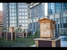 Rooftop Honey Harvest at The Ritz-Carlton, Charlotte - YouTube