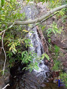 #Spain #Canarias #GranCanaria #Teror  Cascada tras unas ramas
