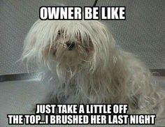 funny dog grooming