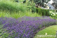 Ogród Sylwii od początku cz.II - strona 950 - Forum ogrodnicze - Ogrodowisko