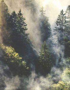 #Туманы #ВголовемоейТуманы #Лес #SweetLure