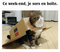 Ce week-end, je sors en boite Silly Cats, Funny Bunnies, Cats And Kittens, Funny Cats, Funny Animals, Cute Animals, Funny Shit, Cat Memes, Funny Memes