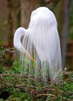Girly Me - (via Nature - Beautiful Birds / Egret) Pretty Birds, Beautiful Birds, Animals Beautiful, Cute Animals, Simply Beautiful, Baby Animals, Beautiful Things, Kinds Of Birds, All Birds