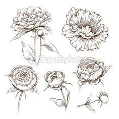elle çizilmiş Şakayık çiçekleri set vektör — Stok İllüstrasyon #27629609