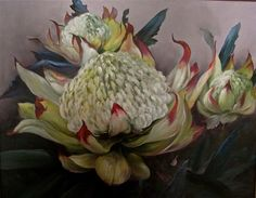 The Glory of the White Waratah by Micheal Giddens. Oil on canvas