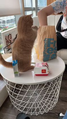 Funny cats compilation 2016 Best funny cat videos ever by Funny Vines.Hope you like a new funny cat videos compilation funny cats and silly cats . Cute Funny Animals, Cute Baby Animals, Funny Cats, Cute Dogs, Wild Animals, Cute Cats And Kittens, I Love Cats, Kittens Cutest, Pet Cats