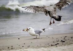 10 Important Marine Ecosystems: Sandy Beach Ecosystem