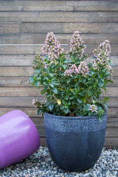 Cool plants for small yards Cool Plants, Potted Plants, Garden Plants, Plants For Small Gardens, Slate Garden, Drought Tolerant, Container Plants, Beautiful Gardens, Evergreen
