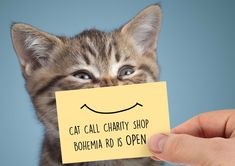 Our Charity Shop is OPEN - Cat Call UK Charity Shop, How To Raise Money, Cats, Fun, Shopping, Gatos, Kitty, Cat, Cats And Kittens